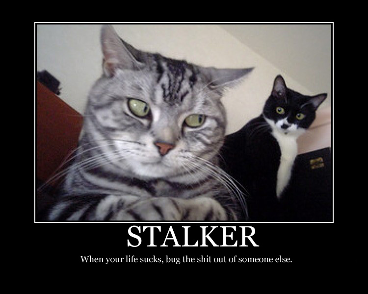 Zimmerman the Stalker